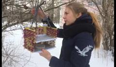 """Волонтерский проект """"Покормите птиц зимой"""""""