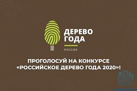 «РОССИЙСКОЕ ДЕРЕВО ГОДА 2020»