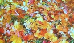 """Презентация """"Осенние зарисовки"""""""