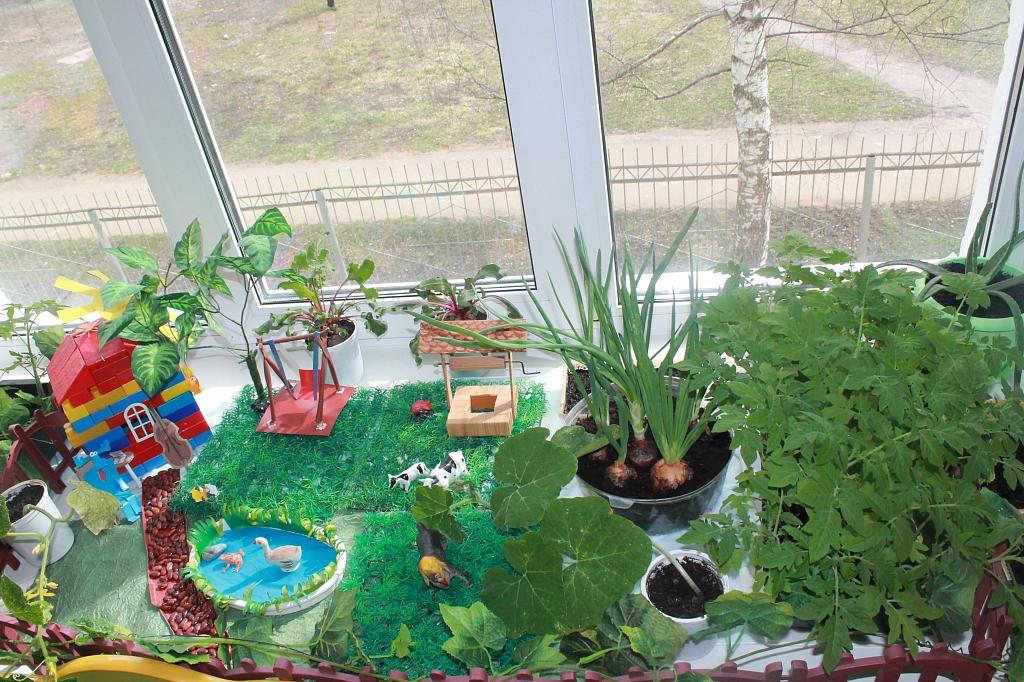 огород на окне это картинки посещаем
